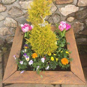 flowers at garden